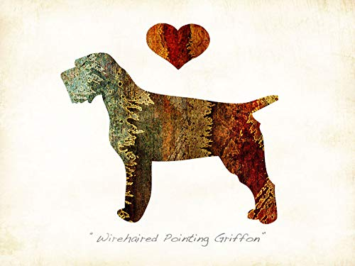 Wirehaired Pointing Griffon Dog Breed Watercolor Art Print by Dan Morris