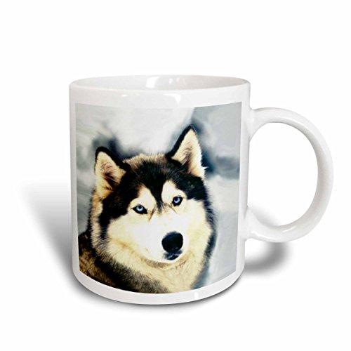(3dRose Staring Siberian Husky Mug,)