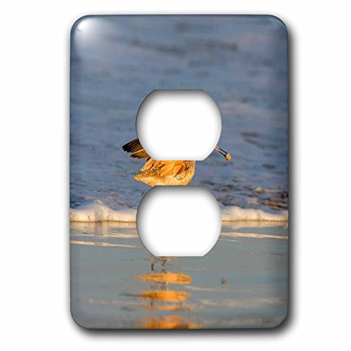 Danita Delimont - Birds - Whimbrel shorebirds foraging Pismo Beach, California - Light Switch Covers - 2 plug outlet cover - Outlet Pismo Beach