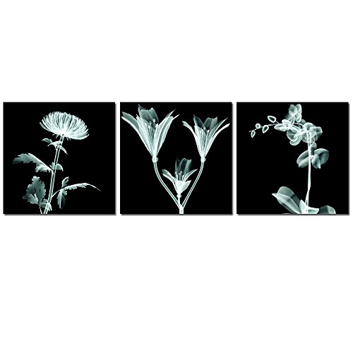 X-ray Orchid - 1