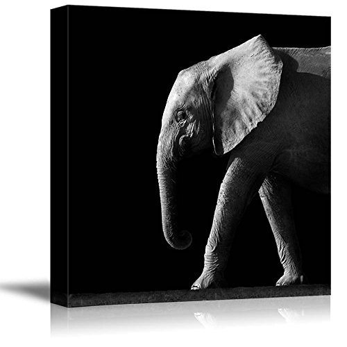 Wild Elephant on a Black Background Wall Decor ation