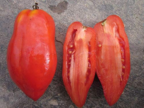 Polish Linguisa Tomato Seeds - Very sweet with few seeds! Early maturing!!(25 - Seeds)
