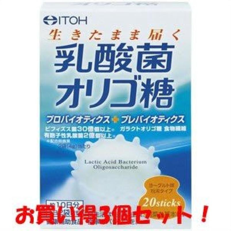 相談職人伝統【井藤漢方製薬】乳酸菌オリゴ糖 40g(2g×20スティック)(お買い得3個セット)