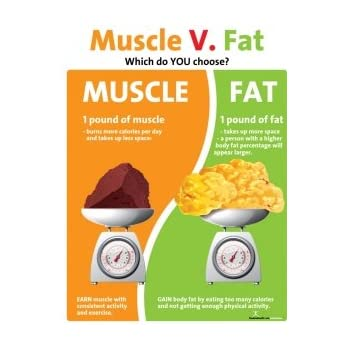 Nutrition Education Store Muscle Versus Fat Poster - 1 Pound Muscle Versus 1  Pound Fat -