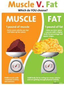 Nutrition Education Store Muscle Versus Fat Poster - 1 Pound Muscle Versus 1 Pound Fat - Exercise Poster - Motivational Health Poster - Fitness Poster