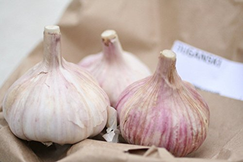 Duganski Garlic ~ Easy to Grow ~ Unbeatable Flavour ~~~ 6...