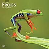 Frogs 2020 12 x 12 Inch Monthly Square Wall Calendar, Wildlife Animals