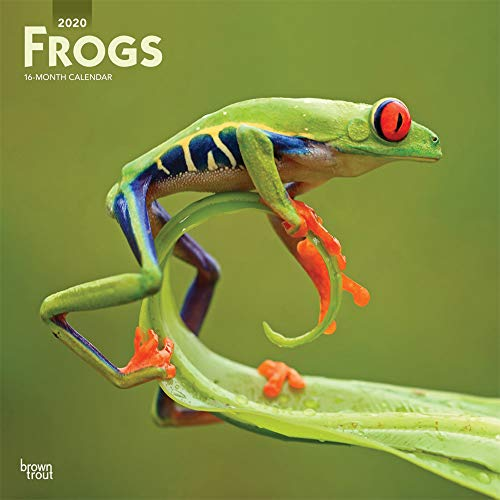 Frogs 2020 12 x 12 Inch Monthly Square Wall Calendar, Wildlife - Calendar Frog