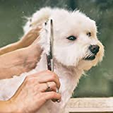 Gimars 4CR Stainless Steel Dog Grooming Scissors