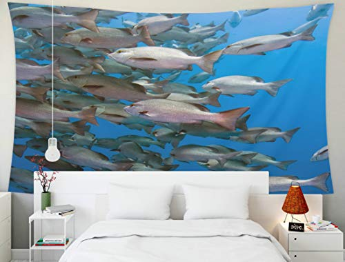 (Shorping Home Decor Tapestry, 60x50Inches Home Wall Hanging Tapestries Art for Décor Living Room Dorm of Snapper in deep Water Off a Coral Reef The Red Sea)