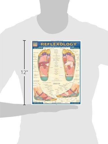 Reflexology (Quick Study Academic Outline)