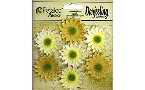 (Petaloo Darjeeling Daisy Mini Yellow)