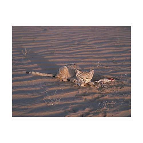 Media Storehouse 10x8 Print of Sand cat (Felis Margarita) (15432135)