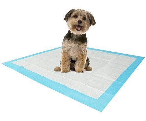 g UnderPads Super Absorbent Large Doggie Pet Incontinence Bedding and Furniture Protection Disposable Pad 22 x 23, 100 Count. ()