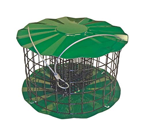 (Large Squirrel Proof Bird Feeder - Fits 2 Suet Cakes To Attract A Variety Of Birds)