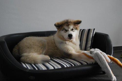 Elevated Dog Bed Furniture