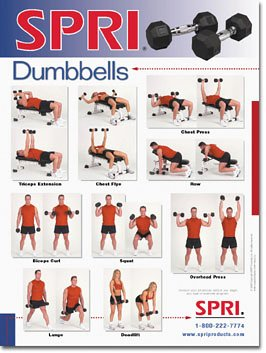 list of dumbbell exercises by muscle group dumbbell - 492×542