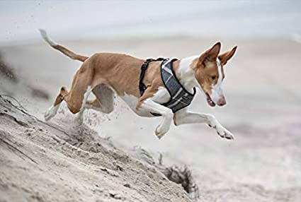 amiplay arnés del Perro para el Pecho London 6 Tamaños y 2 Colores: Amazon.es: Productos para mascotas