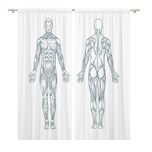 Tinmun 104 x 84 Inch Decorative Drapes Anatomy Muscles in The Body Posterior and Anterior View 2 Panels Window Curtains for Living Room Bedroom Printed