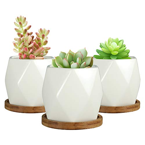 SQOWL 4 inch Ceramic Succulent Planter Pot Modern Cactus Herb Flower Planters with Bamboo Tray Indoor or Outdoor Set of 3