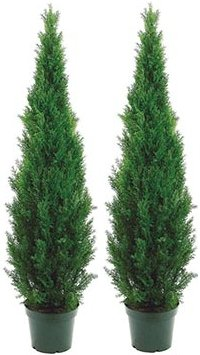 (Two 5 Foot Outdoor Artificial Cedar Topiary Trees Uv Rated Potted Plants One Peace Construction)