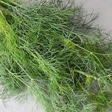New Dill , DUKAT Snip DILL WEED Fresh Herb , 315 SEEDS - Seed Dill Weed