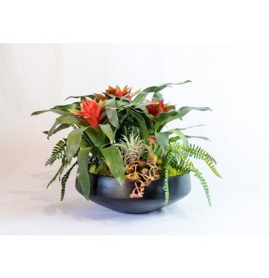 T&C Floral Company 19 x 14 in. Bromeliads And Succulents ...