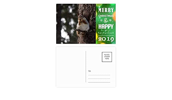 amazoncom cute squirrel forestry science nature scenery 2019 new year postcard thanks card 20pcs office products