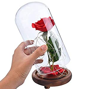 Beauty and The Beast Rose, Enchanted Red Silk Rose Lamp That Lasts Forever with LED, Fallen Petal in Glass Dome on Wooden Base, Best Gift for Holiday Birthday Party Wedding Anniversary Valentine's Day 5
