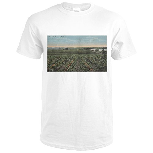 Pineapple Plantation Ready For Harvest In Florida (Premium White T-Shirt (Plantation Pineapple Wall)
