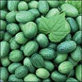 *Seeds and Things Open Pollinated Cucumber Seeds, Mexican Sour Gherkin, 25 Seeds
