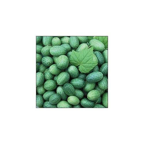 *Seeds and Things Open Pollinated Cucumber Seeds, Mexican Sour Gherkin, 25 Seeds for sale