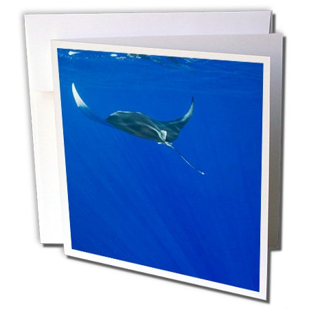 3dRose Hawaii, Big Island, Manta Ray marine life - US12 PSO0033 - Paul Souders - Greeting Cards, 6 x 6 inches, set of 6 (gc_89843_1)
