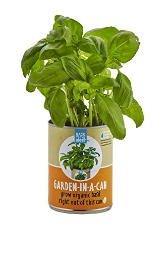 Fresh Basil (Back to the Roots Garden In A Can, Organic Basil)