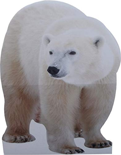 aahs!! Engraving Animal Life Size Cardboard Cutout Stand Up | Standee Picture Poster Photo Print (Polar Bear) (Polar Bear Pictures)