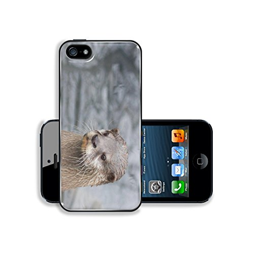 Luxlady Premium Apple iPhone 5 iphone 5S Aluminium Snap Case IMAGE 19903288 Closeup of a n Asian small clawed otter at a river - Nose Best Glasses Asian For