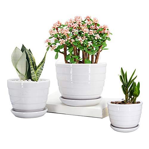 Compare Price To White Flower Pots Bulk Tragerlawz