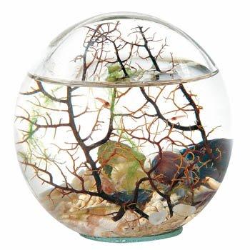 aquarium kugel
