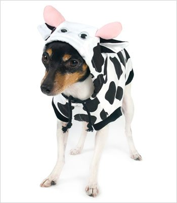 Dog Cow Costume (Cow Costume for Dogs (Size 6 (16