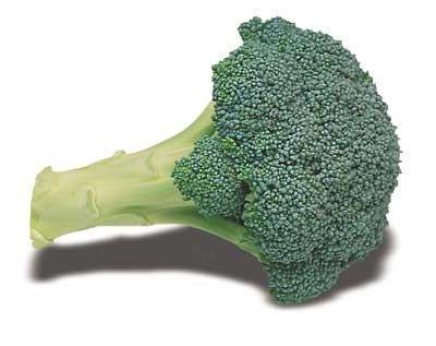 Broccoli Quiche (David's Garden Seeds Broccoli Everest OI020Q (Green) 100 Hybrid Seeds)