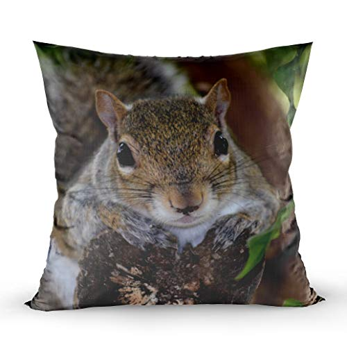 EMMTEEY Home Decor Throw Pillowcase for Sofa Cushion Cover, Squirrel Animal on Log Hanging Out Colour Decorative Square Accent Zippered and Double Sided Printing Pillow Case Covers 16X16Inch ()