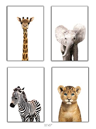 Designs by Maria Inc. Safari Baby Animals Nursery Decor Art - Set of 4 UNFRAMED Wall Prints (Option 2 (11x17) from Designs by Maria Inc.