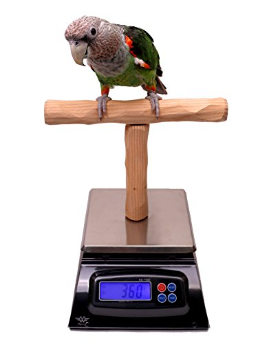 (NU Perch Parrot Training Scale)