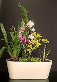 Maceta de autorriego Hidro+z en cerámica ecológica jardinera - Maceta inteligente para todo tipo de plantas