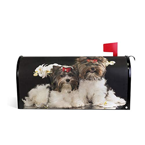 WOOR Puppies Beaver Yorkshire Terrier Dog Magnetic Mailbox
