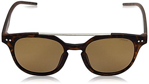de Brown Brown Pz 202 Polaroid Gafas Sol Marrón PLD 51 S Unisex Havana Adulto 1023 IG nO6OYqFf