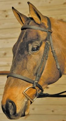 Wintec Bridle Without Flash Cob Black
