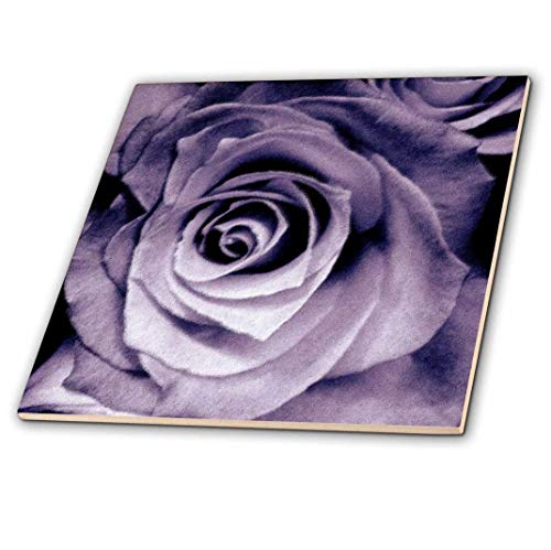 3dRose Lavender Purple Rose - Ceramic Tile, 4