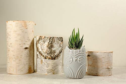 Hallmark Flowers Live Succulent in 3'' Grey Owl Ceramic Container by Hallmark Flowers (Image #1)