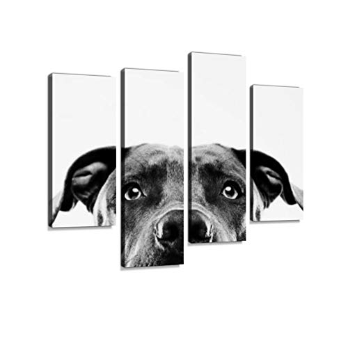 Black and White Pit Bull Dog Studio Portrait Canvas Wall Art Hanging Paintings Modern Artwork Abstract Picture Prints Home Decoration Gift Unique Designed Framed 4 Panel